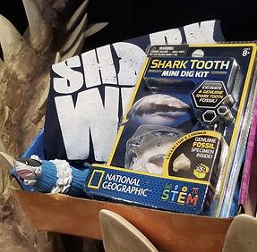 shark box.jpg