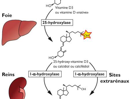 Vitamine D et cancer