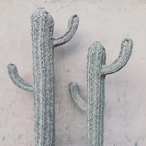 Cactus natural