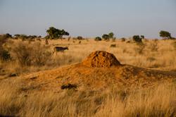 Termite home, Tsavo East