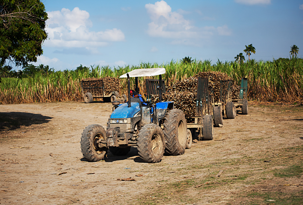 Sugar Cane Production