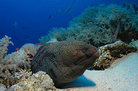 diving courses, fun diving, moray eel