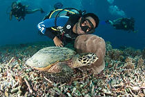 turtles of gili t, diving on gilis, trawangan