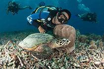 turtles of gili t, diving on gilis, trawangan