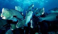 diving courses, fun diving, parrot fish