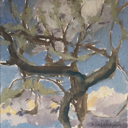 """Covid Blossoms.     The wrapped branches form a holding space, a hug, for the blissfully free floating clouds bringing smiles.  How free the clouds are - allowed to come and go.    Oil on Canvas 12""""x12"""""""