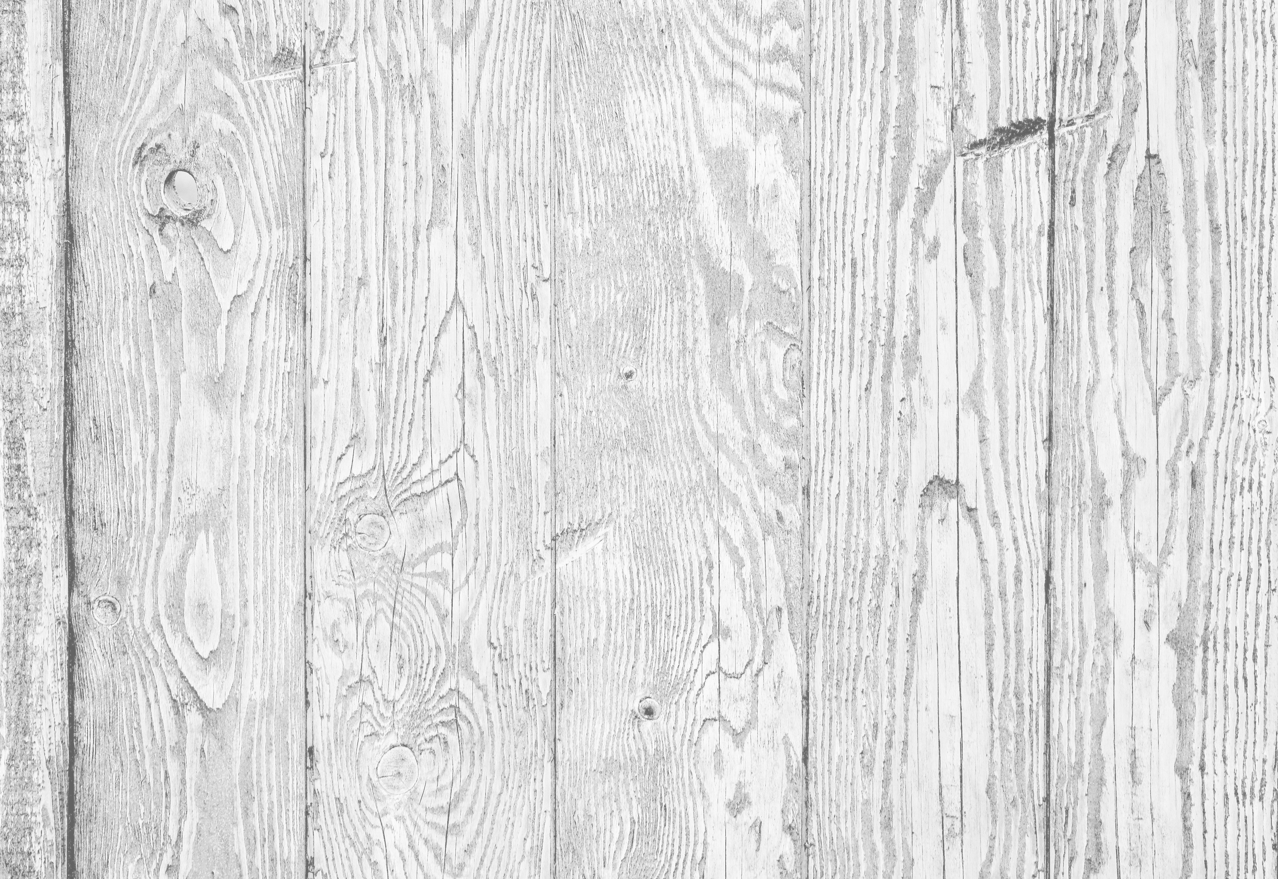 White wood texture background of distressed pine wood with knots. Natural white wooden texture wallp