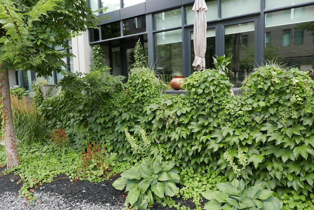 Corktown dentist neighbourhood condo living. Dental office highlights green neighbourhood.
