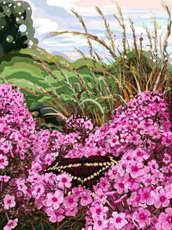 Swallowtail in phlox.jpg