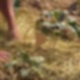 video progresso permakultur-2_edited.png