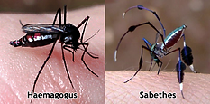 mosquito 6.png