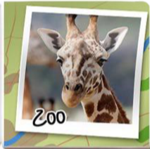 Fève Zoo
