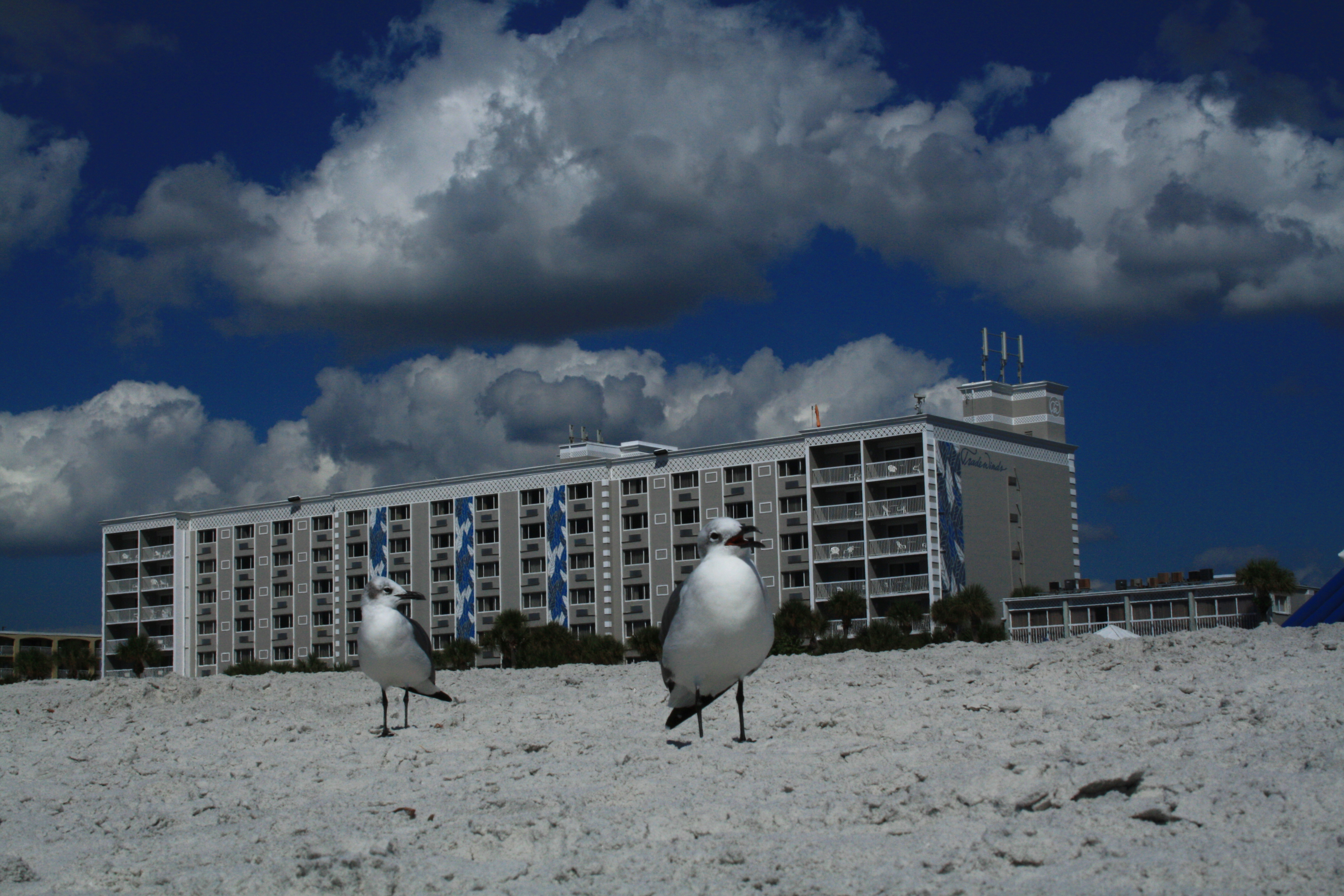 St Petersburgh, FL