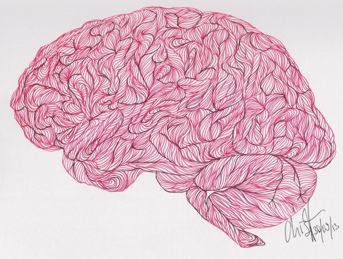 Brain articles