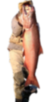 Alaska Copper River King Salmon