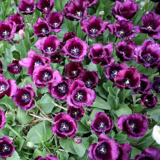 FleursKeraret-0264.jpg
