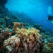 Дайвинг в Рифе
