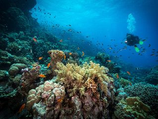 What happens when Coral Reefs die?