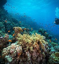 Buceo en el arrecife