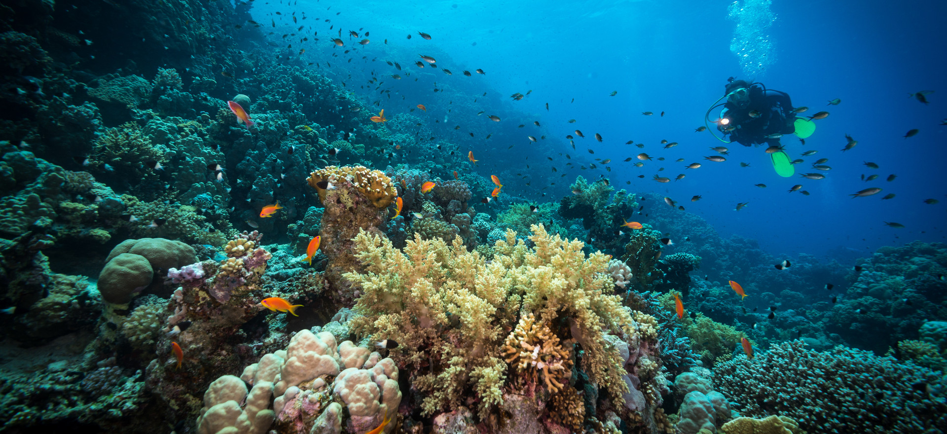 Plongée dans le récif - Floraly Komba