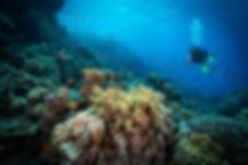 암초에서의 다이빙