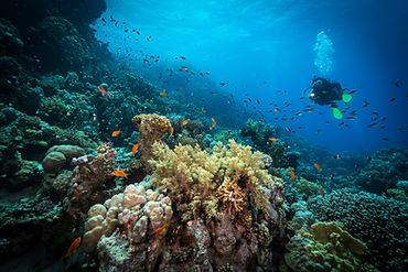Potápění v útesu
