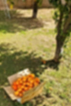 PHOTO-2020-02-09-11-59-22%202_edited.jpg
