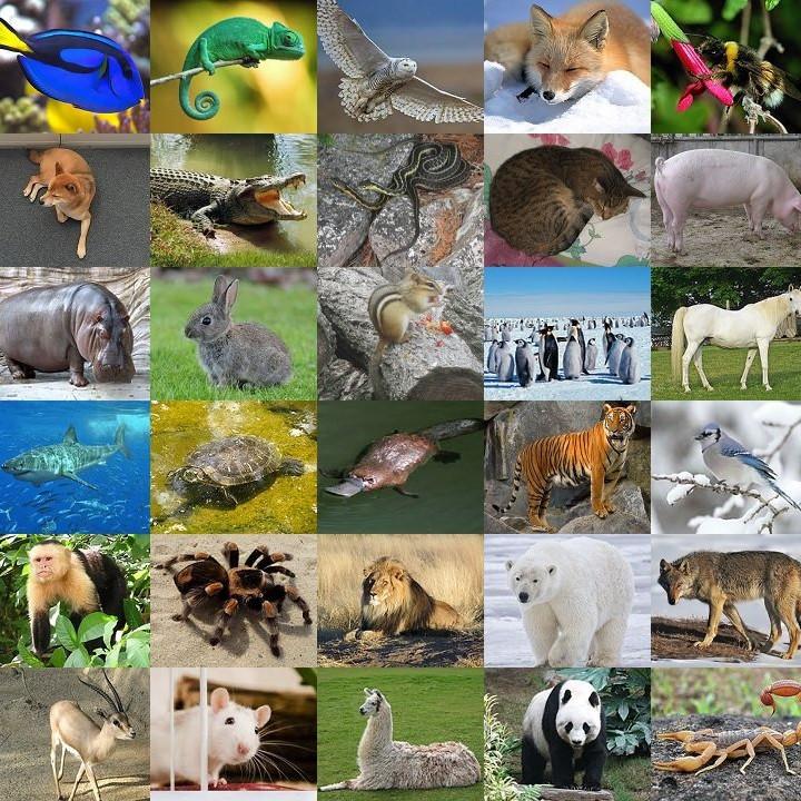 Name the animal quiz