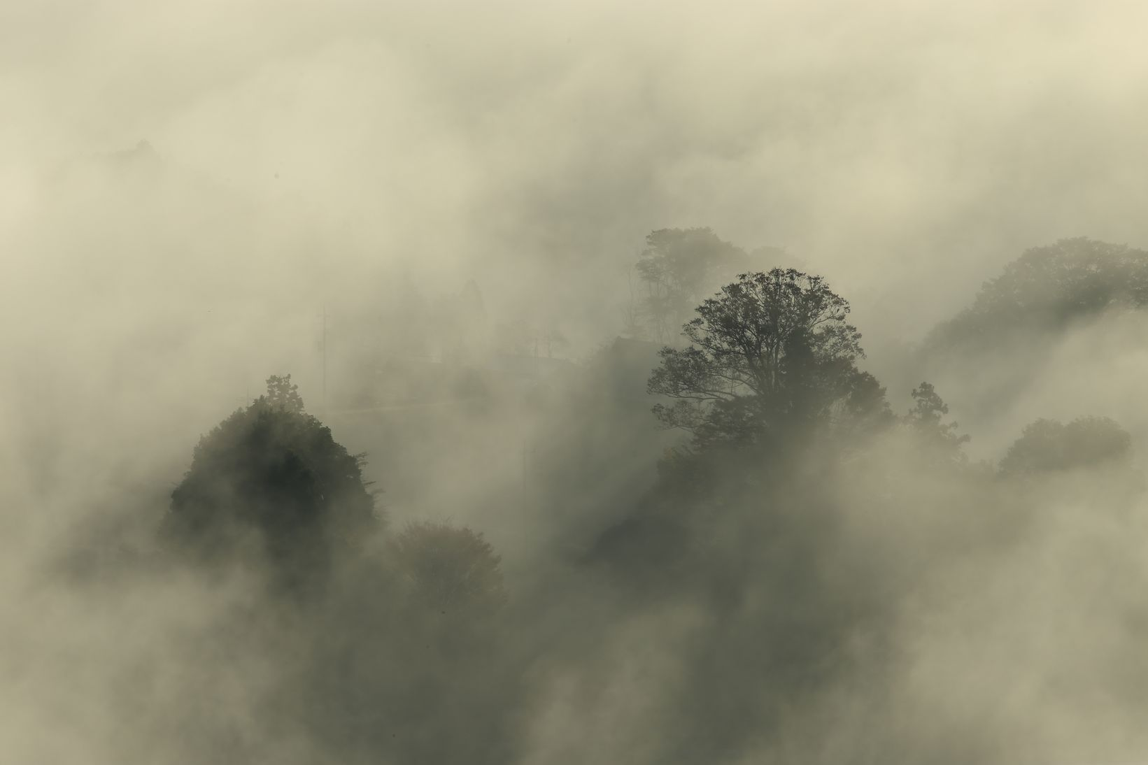 鎌倉山雲海
