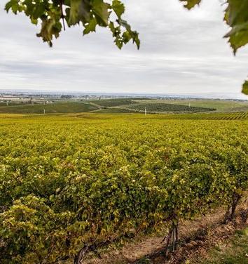 Summit View Vineyard