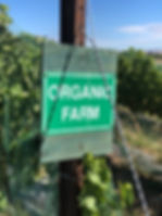 "Piture of sign in vineyard reading ""Organic Farm"""