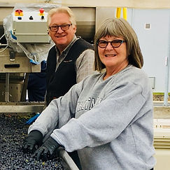 Mark and Patty Anderson sorting grapes on a shaker table.
