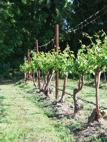 Stonemarker Vineyard