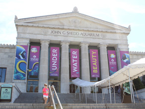 Shedd Aquarium is free for Illinoisans on these September days