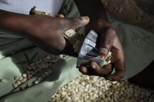 Shelling maize in half the time. Photo: OneAcreFund.org - Stephanie Hanson