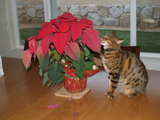 The toxic and the tame - which holiday plants you should really avoid around your kitties