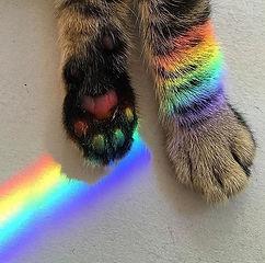RainbowPaw.jpg