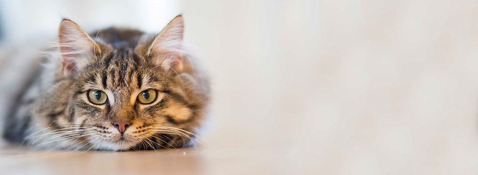 cat-background-higgins-free.jpg