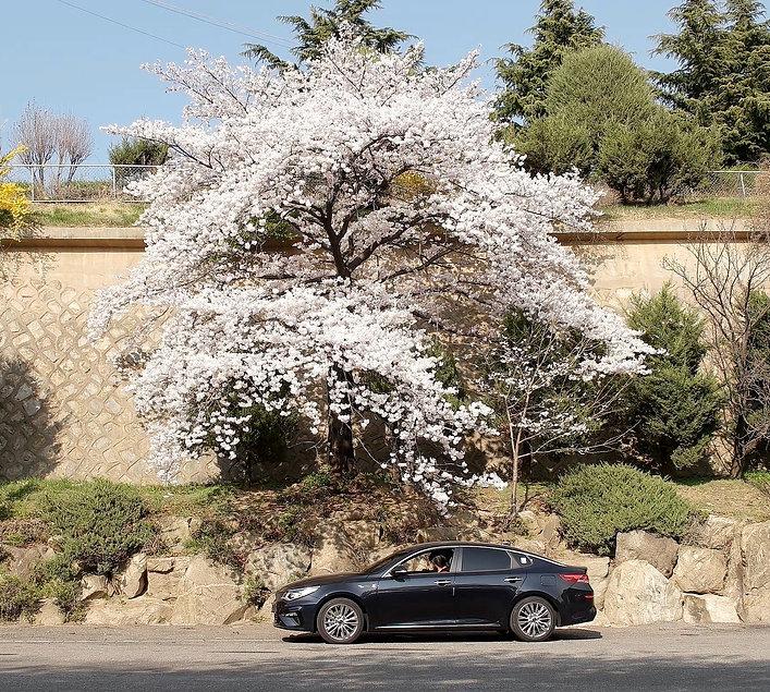 4월의 어느 날 1616.mp4_20190417_112751.577.jp