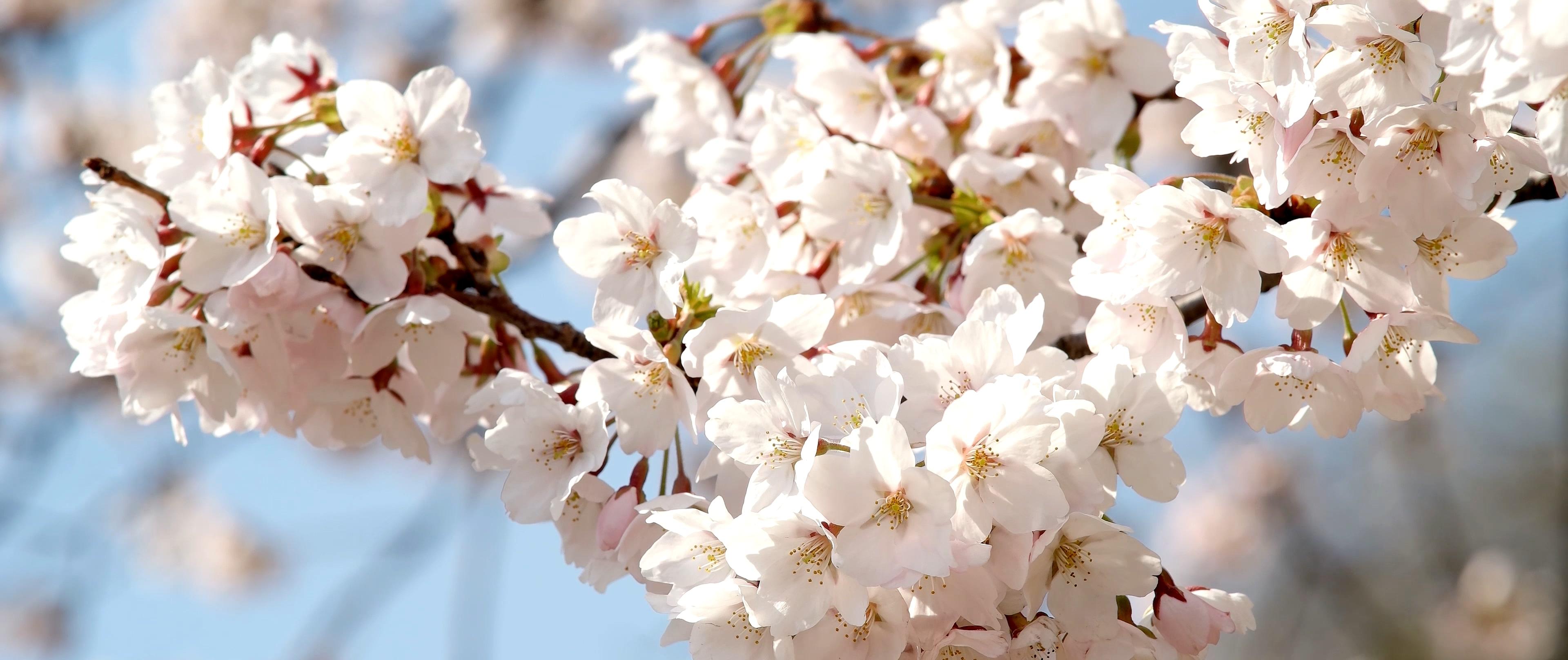 4월의 어느 날 1616.mp4_20190417_112825.156