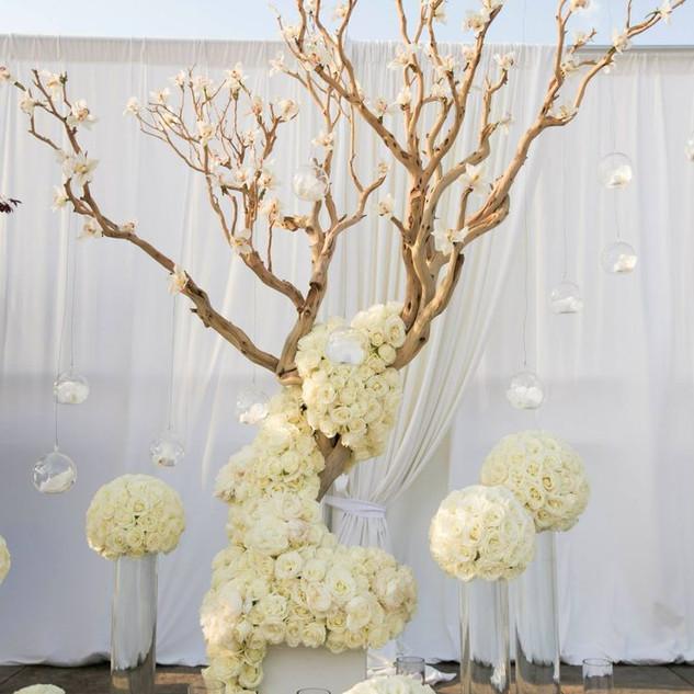 Whitewash Wish Tree