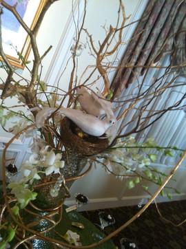 Bird nest in wish tree TerryDiddle Farm