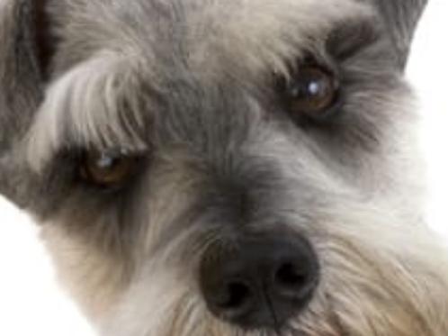 Vet Help!... My dog has Pancreatitis!
