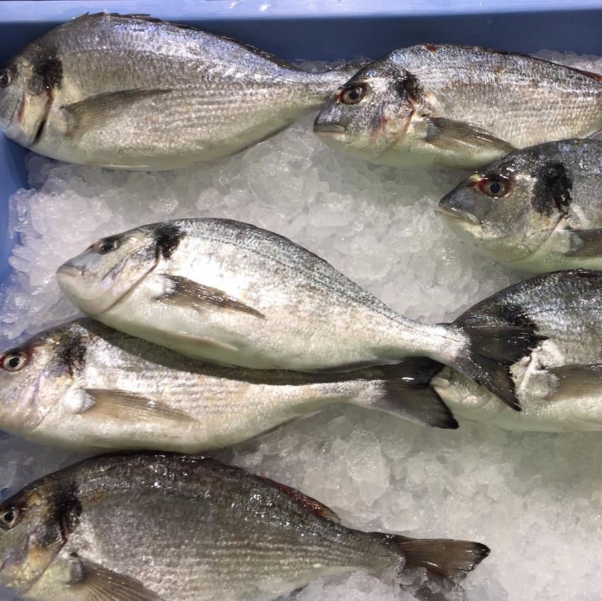 Sea bass (lubina)