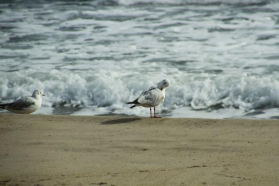 Birds on Villajoyosa beach
