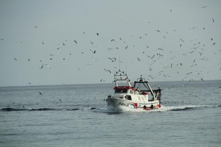 When the boat comes in: Villajoyosa fish market