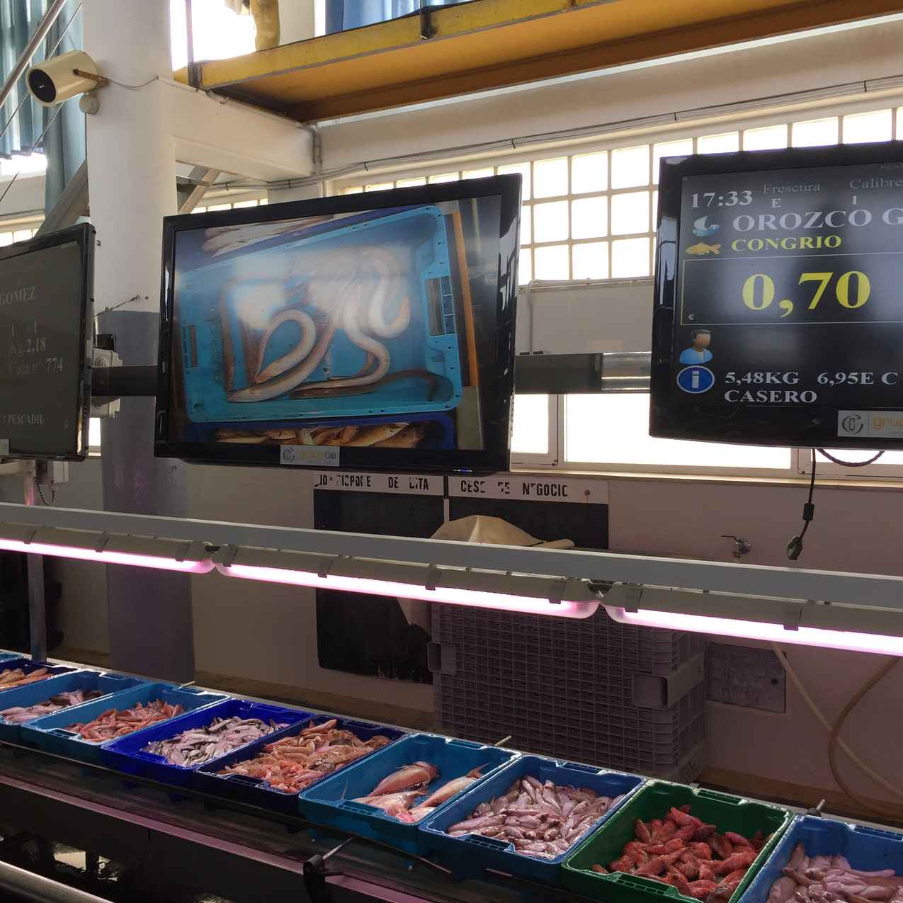 Fish auction under way