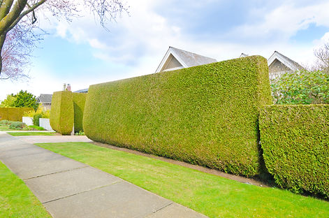 "Nicely trimmed ""Green fence ' from everg"