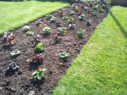 Gardener Leyland