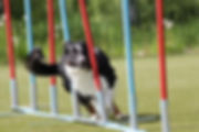 agility_3-768x512.jpg